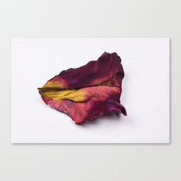 Dried Rose Petal Canvas Print