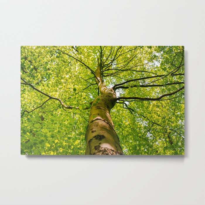 Sunlight Through Green Tree Crown Metal Print