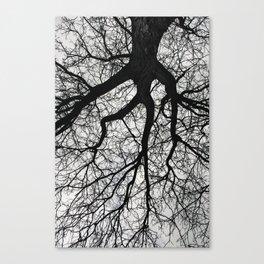 Tree Vines Canvas Print