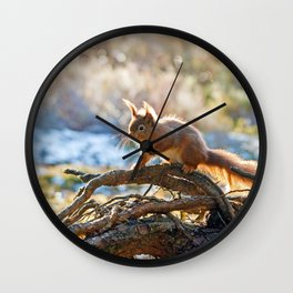 Squirrel on branch Wall Clock
