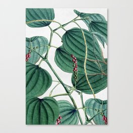 Green leaves I Canvas Print