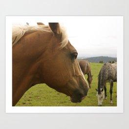Horses in a Field Art Print