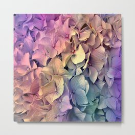 Soft Multi Color Hydrangea Metal Print