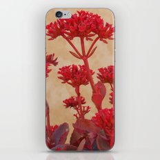 Rustic Flowers iPhone & iPod Skin