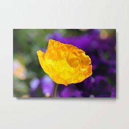 Yellow Poppy 2 Metal Print