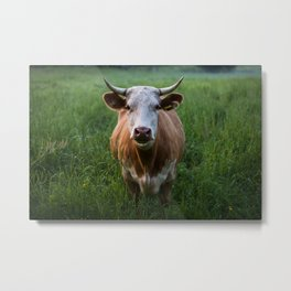 COW - FIELD - GREEN - VALLEY - NATURE - PHOTOGRAPHY - LANDSCAPE Metal Print