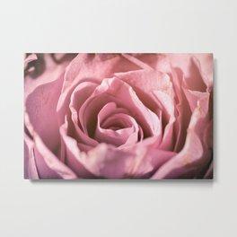 Pink Rose Macro Metal Print