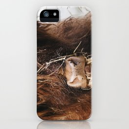 Highland cow feeding on straw on a frosty winters morning. Norfolk, UK. iPhone Case