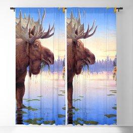 Big Elk Moose Grazing In Pond Ultra HD Blackout Curtain