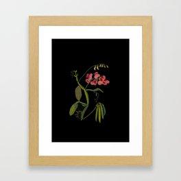 Lathyrus Latifolius Mary Delany Delicate Paper Flower Collage Black Background Floral Botanical Framed Art Print