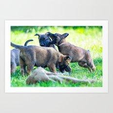 Wild Puppies Herder-Shepherds Art Print