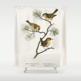 Eurasian wren (Nannus troglodytes) - Goldcrest (Regulus regulus) illustrated by the von Wright broth Shower Curtain