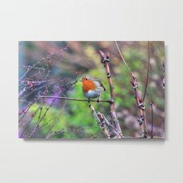 Garden Robin Metal Print
