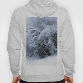 Snow covered branches Winter cold at Creamers Field Fairbanks  Alaska Hoody