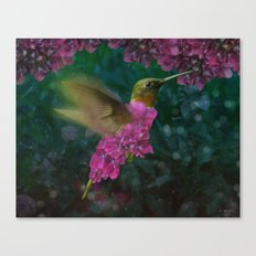 If a hummingbird became a hydrangea Canvas Print
