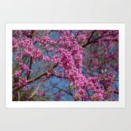Blue skies and redbud in spring Art Print