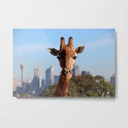 Sydney Urban Safari Metal Print