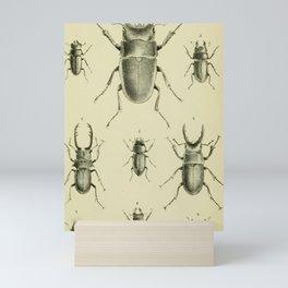 F.J. Sidney Parry - A catalogue of Lucanoid Coleoptera (1864) - Beetle species Mini Art Print