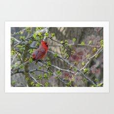 His Majesty the Cardinal Art Print