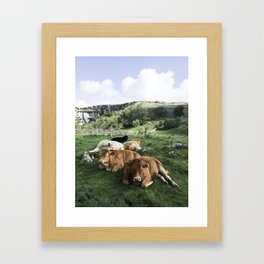 The cows Framed Art Print