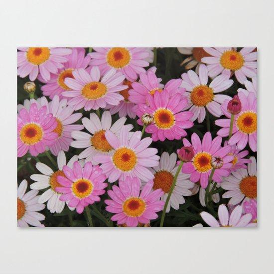 Petals, Petals, Petals Canvas Print