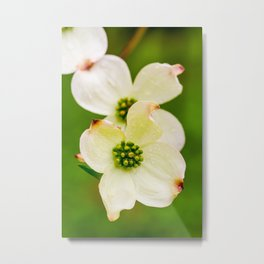 March of the Dogwood Metal Print