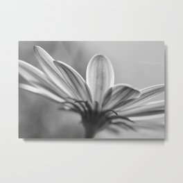 Purple Hints of Black and White Metal Print