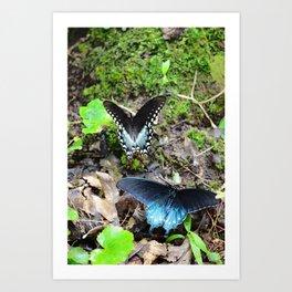 Butterflies on a Mountain Trail Art Print
