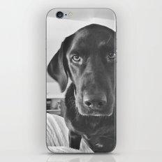 Dog 2 iPhone & iPod Skin