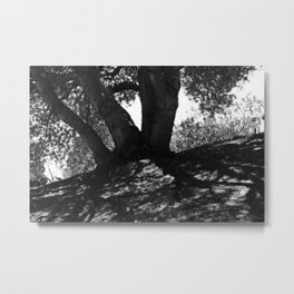 Tree shade in a hot summer day Metal Print
