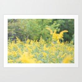 Field of Goldenrod Art Print
