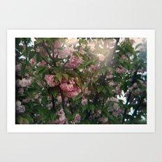 holga flowers. Art Print