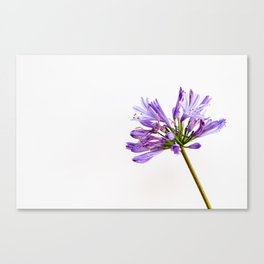 Flowering Wither Canvas Print