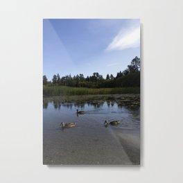 ducks in the pond Metal Print