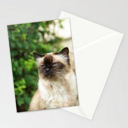 Kittycat2 Stationery Cards
