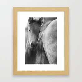 Original horses photo. Black & White, fine art, animal photography, landscape, b&w Framed Art Print