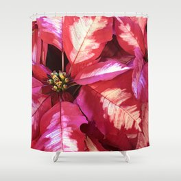 Vibrant Red Pink Christmas Holiday Poinsettia Leaves Shower Curtain