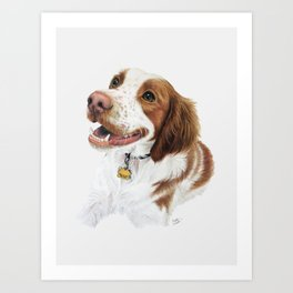 Hand Drawn Brittany Spaniel Dog Portrait Art Print