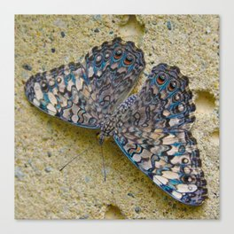Turquoise and Sand Butterfly by Teresa Thompson Canvas Print