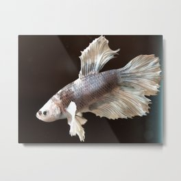 Swimming Along Metal Print