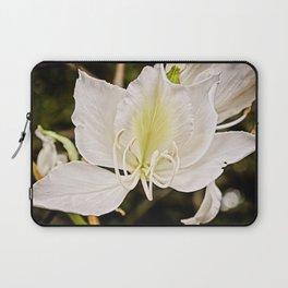Butterfly tree or Bauhinia variegata Laptop Sleeve