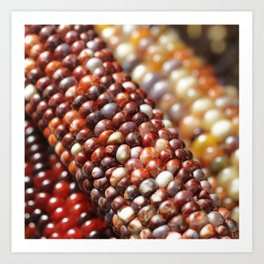 Indian Corn -Autumn Fall Decor Art Print