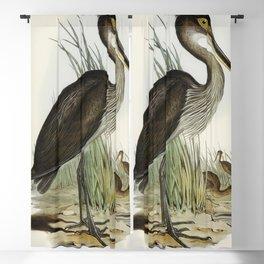 Great-billed Heron (Ardea rectirostris) illustrated by Elizabeth Gould (1804-1841) for John Goulds ( Blackout Curtain