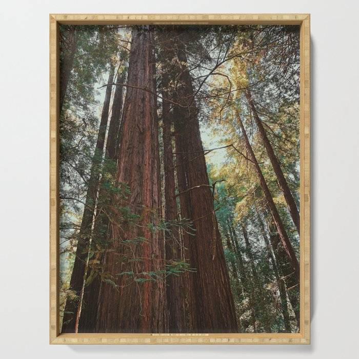 Redwood Trees Serving Tray