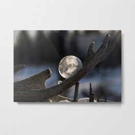 Bubble on Deer Antler Shed Metal Print