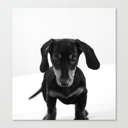 Weenie dog (black and white) Canvas Print