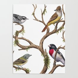 Four Songbirds Poster