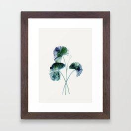 Water lily leaves Framed Art Print