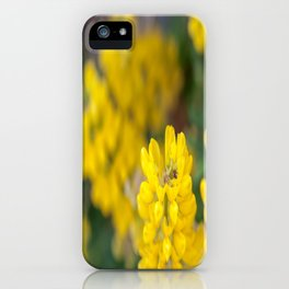 Ladybug in a Yellow Lupin, Dunedin, New Zealand iPhone Case