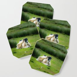Wind sheared Sheep Coaster